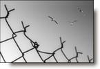 Reconfinement  thème de la semaine: Liberté